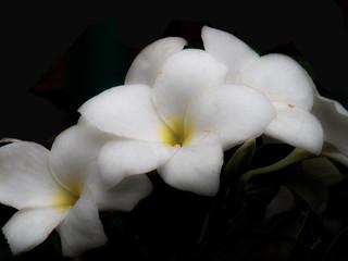 Dusty Flower :(