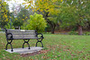 Memories (nicolemonsees) Tags: park trees falls leaves nature bench seasons outside outdoors saratoga congresspark colors newyork woodenbench