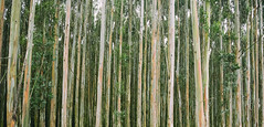 Southland Trees (newzild) Tags: newzealand teararoa hiker tramper trail route long distance capereinga bluff nzl