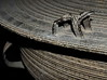 Museum Adventures (Mike Peckett Images) Tags: karendrums pittriversmuseum pittriversmuseumoxford pittrivers museumadventurespart2 museum frog bronze mikepeckett mikepeckettimages karen rain prm