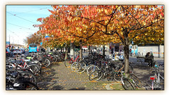 1 of 13 October photos in my part of the world (4) (andantheandanthe) Tags: nature autumn fall leaf leafs october gothenburg göteborg järntorget yellow braun green city bycicles
