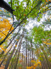 Home (brooksbos) Tags: brooks brooksbos wachusett massachusett nature trees forest woods wonder autumn foliage fall leaves blessing earth wonderment geotagged lg g6 smartphone android