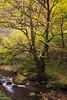 Río Narcea (elosoenpersona) Tags: otoño fall rio river tree haya arbol cangas de narcea asturias occidente elosoenpersona fagus