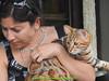 gio_k2_2017_08_379 (giordano torretta alias giokappadue) Tags: abetone bengala gastone gatto kat