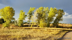 October 1, 2017 - Late day sun lighting up trees in Broomfield. (David Canfield)