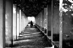 Under the leaves (pascalcolin1) Tags: paris bercy femme woman ombres shadows lumière light feuilles leaves photoderue streetview urbanarte noiretblanc blackandwhite photopascalcolin 50mm canon jardin garden