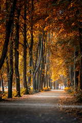 Autumn. First steps #2 (Unicorn.mod) Tags: 2017 colors autumn park alley shadows light leaves manual manuallens canoneos6d samyang85mmf14asifumc samyang myfocus nature landsape