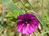 Kwiaty Blumen Biedronka flower (arjuna_zbycho) Tags: kwiaty blumen flower biedronka maikäfer marienkäfer ladybird coccinellidae ladybirds coccinella magnifica ladybugs ladybirdbeetles ladybeetles