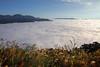 合歡山雲海 (Eddy_TW) Tags: 雲海 雲霧 seaofclouds clouds 山 mountians 風景攝影 travel canon 大自然 nature 台灣 taiwan 南投縣 nantou 仁愛鄉 合歡 合歡山 台14甲 合歡山雲海