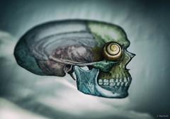(Jen MacNeill) Tags: spooky horror halloween anatomy book nature body art skull creepy