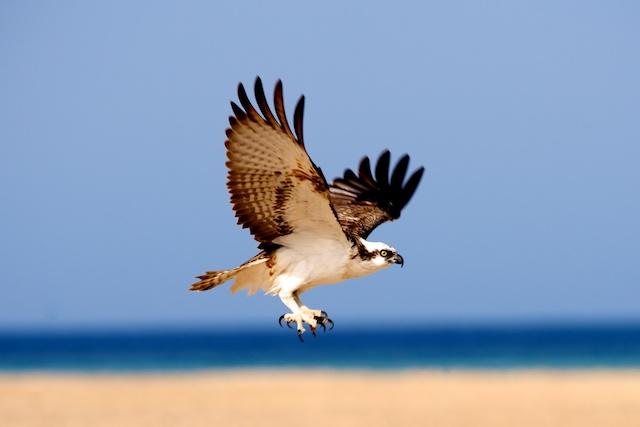 エジプトの野鳥を見よう!早朝バードウォッチングツアー(海外の動物に出会えるオプショナルツアー)