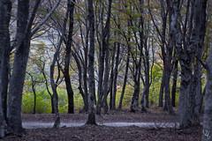 CANFAITO (VikingAle) Tags: canon canonshots canonphotography mountains italy italian italianlandscape canfaito elcito marche woods nature naturephotography bosco