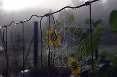 Beaded with Light (Leafing Photography) Tags: fall autumn garden october spiderwebs spiders pacificnorthwest fallgarden