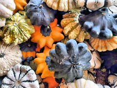 Pumpkin heaven (losy) Tags: autumn pumpkins herbstanfang vegetables heaven colorful healthyeating losyphotography squash