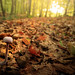 Montagspilz [explored] (O.I.S.) Tags: pilz fungus wald forest wood herbst autumn fall wiehengebirge owl germany deutschland natur nature outdoor canon m3 15 45 1545 foliage leaves explored
