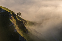 Winnats Pass Lonely Tree (Twiggy's Photography) Tags: