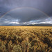 Rainbow and sagebrush, Grand Teton National Park, Jackson, Wyoming