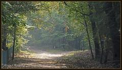 Still green in the wood... (♥ Annieta ) Tags: annieta september 2017 sony a6000 nederland netherlands veluwe beekbergen bos wood trees autumn herfst allrightsreserved usingthispicturewithoutpermissionisillegal licht light path pad bomen kruising zonlicht sunlight crossing