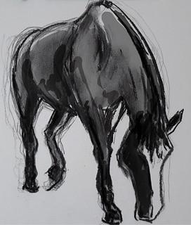 Horse Study [20170908] (843)c