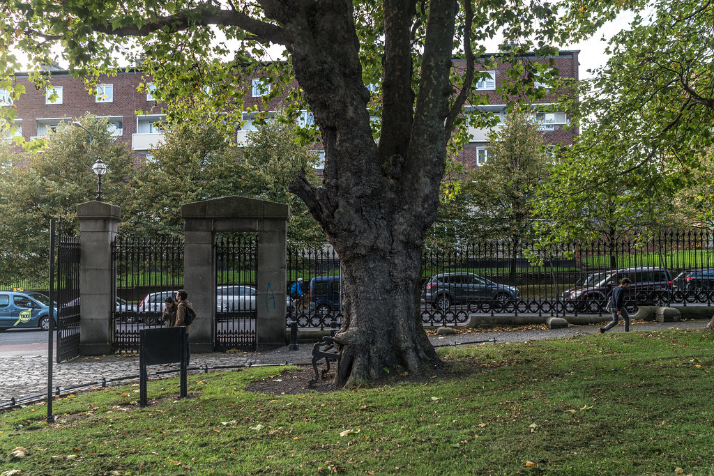 I REFER TO THIS AS THE HUNGRY TREE [LOCATED IN KINGS INNS PUBLIC PARK DUBLIN 7]-133233