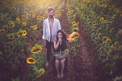 The harvest II / La cosecha II (Jesus Solana Poegraphy) Tags: sunflower seeds outdoor fineartphotography beauty mistery sunset yellow brown couple fairtale