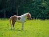Horse standing on green field - #m43turkiye (Ciddi Biri) Tags: animal bestfriends equestrian garden grass grazing greenfield horse horseride mammal meadow nature outdoor plant rideon springtime stallion sunny transport peaceful omdem10 olympus40150mmr m43turkiye olympusturkiye olympuspolska getolympus