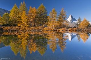 Trees in fall - Zermatt