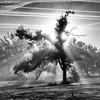 Matin d'octobre (Pluie du matin) Tags: octobre october hatman arbre trees lumière light france nb bw monochrome squared carré morning matin aube automne autumn blackandwhite