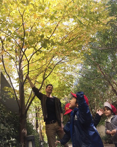 Explored autumn today! 秋の探索に行きました! . Starkids International Preschool, Tokyo. #starkids #international #preschool #school #children #kids #kinder #kindergarten #daycare #fun #shibakoen #minatoku #tokyo #japan #instakids #instagood #twitter#子供 #幼稚園 #保育園 #ス