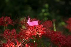 Rabbit and Lycoris radiata (Ichigo Miyama) Tags: うさぎとヒガンバナ rabbit lycorisradiata origami おりがみ うさぎ 折り紙 paper ヒガンバナ flower おりがみ写真 origamiphotoorigami 花 origamiphoto