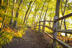A Walk Through the Woods (MCarrabs) Tags: select flowers flower beach morgan park canon green yellow sunset grass t3i sun white stage walk woods glen cove long island new york nature plants tree colors skyline dirt water ocean sound explore trees leaves silhouette