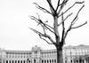 ClipMonarchy.jpg (Klaus Ressmann) Tags: klaus ressmann avienna austria hofburg nikon winter blackandwhite cityscape flccity melancholy softtones tree klausressmann