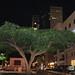 Tree in Tel Aviv