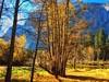 Autumn Splender (lindayaecker) Tags: vacation happyscene blueskies towering bluemountains greengrass brillianttrees goldenmeadows
