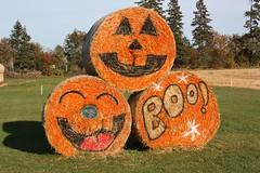Halloween Hay Bales (Craigford) Tags: stratford pei canada hay bales decorations halloween fall autumn