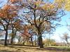 Minnehaha Park 171022_033 (jimcnb) Tags: 2017 oktober minnehaha minneapolis minnesota