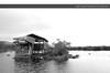 Lets Drink and swim home (Gabby Canonizado 02 (New account)) Tags: blackandwhite bar lake naivashalake gabbycanonizado gabby canonizado photography kenya naivasha naivaishalake