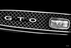 undomesticated... (Stu Bo) Tags: musclecar canon certifiedcarcrazy classiccar car canonwarrior chrome gto fast speed horsepower grill blackandwhite bw monotone