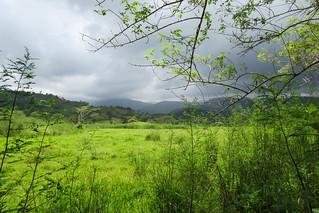 Green landscape due to wet season