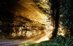 An explosion of light (Wouter de Bruijn) Tags: fujifilm xt1 fujinonxf35mmf14r sunrise dawn morning sun burst sunburst light ray rays explosion nature forest path tarmac road outdoor bokeh depthoffield veere walcheren zeeland nederland netherlands holland dutch