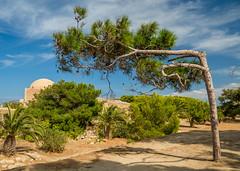 Gave up Tree (joe shot) Tags: tree shape desert park broken naturaly shaped