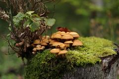 Pilzsammlung im Wald (Vinc_1995) Tags: pilz eos eos200d canon wald forest nature natur photography fotografie fall herbst pilze mushroom