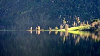 Trær ved vatn -|- Trees by lake