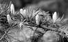 Morris Arboretum_001_01 (mujetdebois) Tags: canonelan100 35mm ilfordfp4plus400 film analogphotography biancoenero blackandwhitephotography filmisnotdead filmlives filmphotography istillshootfilm monochrome negroyblanco noirblanc schwarzundweis shootfilmstaybroke черноеибелое morrisarboretum