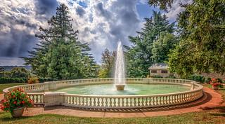 Maymont Park tree-2