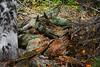 Looking Glass Pond (morganjellen) Tags: fall ny nature newyork hikingtrail stateforest burntrossmann lookingglasspond schohariecounty upstateny catskills leaves foliage fallcolors