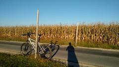 herbstliche afterwork Runde (twinni) Tags: mw1504 16102017 bike biketour salzburg austria österreich flachgau mtb winterbike winterradl 20 bergziege magura vyron elect