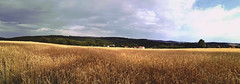 P a n o r a m a (Cé Graphy's) Tags: huaweip8lite2017 camera capture picture photo photographie shot nature light sun panorama wheat wheatfields sky clouds forest house trees farm sunlight shadow field summer campaign