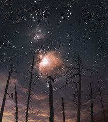 Meanwhile (petrisalonen) Tags: astrotrac longexposure longexpo astrophotography silhuette silhouette orion orionm42 clouds sky space stars trees photoshop finland birds