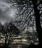 DSC_0569~2 (billybluesky23) Tags: threegraces trees newbrighton valepark liverpool themersey silhouette